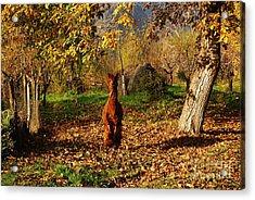 Sassy Alpaca Acrylic Print by Susan Hernandez