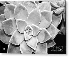 Sassy Succulent Acrylic Print by Sabrina L Ryan