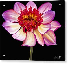 Satin Flames Acrylic Print by Laura Bell