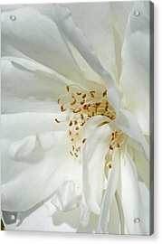 Satin Sheets Acrylic Print by Steve Taylor