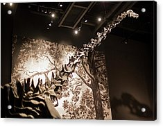 Sauropod Dinosaur Fossil Display Acrylic Print