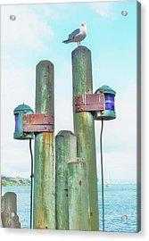 Sausalito Seagull Acrylic Print by John King
