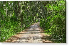 Savannah Country Road Acrylic Print by D Wallace
