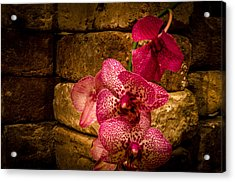 Savannah Grey Orchid Acrylic Print by Richard Kook