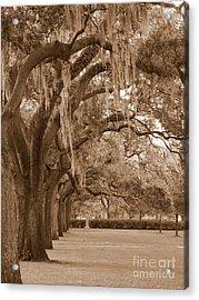 Savannah Sepia - Emmet Park Acrylic Print by Carol Groenen