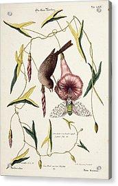 Savannah Sparrow And Cicada Acrylic Print by Paul D Stewart