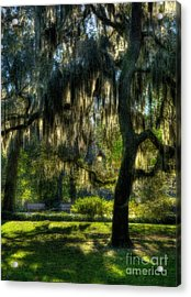 Savannah Sunshine Acrylic Print by Mel Steinhauer