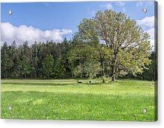 Save My Tree Acrylic Print by Jon Glaser