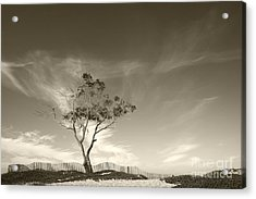 Save The Tree Acrylic Print