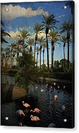 Savoring The Last Light Acrylic Print by Laurie Search