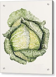 Savoy Cabbage  Acrylic Print by Alison Cooper