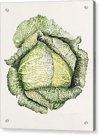 Savoy Cabbage  Acrylic Print
