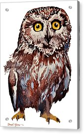 Da148 Saw Whet Owl Daniel Adams Acrylic Print