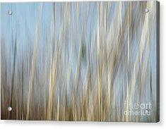 Sawgrass In Motion Acrylic Print by Benanne Stiens