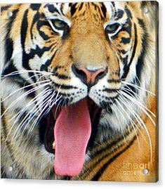Say Ahhh Acrylic Print by Emmy Marie Vickers