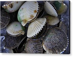 Scallops Acrylic Print by Laurie Perry