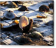 Half Shell On Ice Acrylic Print by Karen Wiles