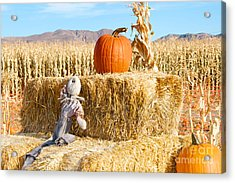 Acrylic Print featuring the photograph Scarecrow Breaktime by Vinnie Oakes