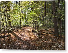 Scared Grove 2 Acrylic Print by William Norton