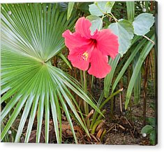 Scarlet Hibiscus Acrylic Print by Kay Gilley