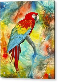 Scarlet Macaw In Abstract Acrylic Print by Paul Krapf