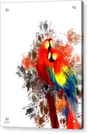 Scarlet Macaw Acrylic Print by Lourry Legarde