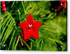 Acrylic Print featuring the photograph Scarlet Morning Glory - Horizontal by Ramabhadran Thirupattur
