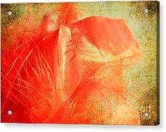 Scarlet On Vintage Acrylic Print