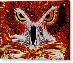 Scarlet Owl Acrylic Print by David Cates
