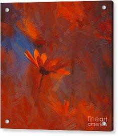 Scarlet Petals  Acrylic Print