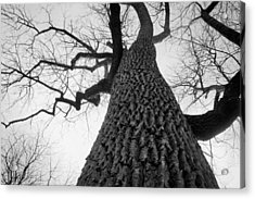 Scary Tree Acrylic Print by Richie Stewart