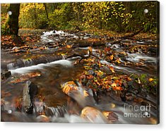 Scattered Leaves Acrylic Print by Mike  Dawson