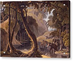 Scene In Sitsikamma - Elephants Acrylic Print by Samuel Daniell