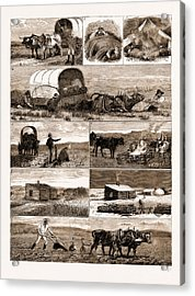 Scenes From An Emigrants Life In Manitoba Acrylic Print