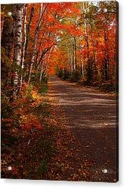 Scenic Maple Drive Acrylic Print