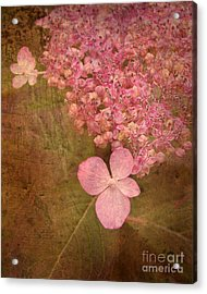 Scent Of Hydrangea Acrylic Print