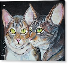 Scheming Cats Acrylic Print