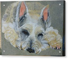 Schnauzer Pet Portrait Original Oil Painting 8x10 Inches Made To Order Acrylic Print