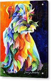 Schnauzer Too Acrylic Print by Sherry Shipley
