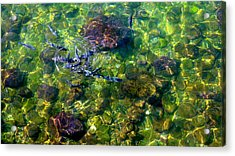 School Of Fish Acrylic Print by Olga Breslav