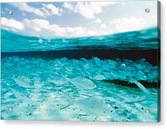 School Of Fish, Submerged Acrylic Print by Panoramic Images