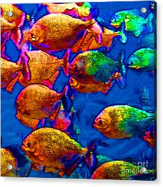 School Of Piranha V3 - Square Acrylic Print by Wingsdomain Art and Photography
