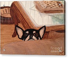 Scooter Peeking Over Couch Acrylic Print by Michelle Treanor
