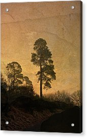 Scots Pine Acrylic Print by Liz  Alderdice