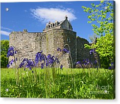 Scots Spring Bluebell Flowers At Scotland Dunstaffnage Castle  Acrylic Print