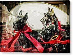 Scotties In The Window Acrylic Print by Caitlyn  Grasso