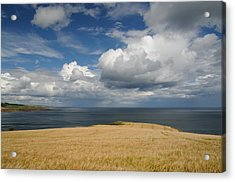 Scottish Coastal Wheatfield Acrylic Print by Jeremy Voisey