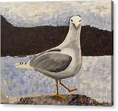 Scottish Seagull Acrylic Print by Susan Williams