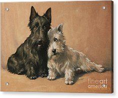 Acrylic Print featuring the painting Scottish Terrier by Christopher Gifford Ambler