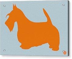 Scottish Terrier Orange Acrylic Print